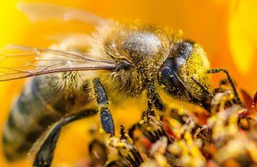 Czym jest pszczoła? cz. 2 Odpowiedź Whiteheada